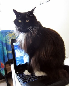 cat-says-no-laptop1